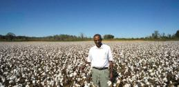 Haile Tewolde in field of cotton with poultry litter