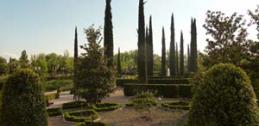 Cypress trees in Garcia Lorca Park, Spain.