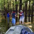 Collecting soil sample in a bottomland wetland forest, Mississippi Valley.
