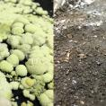 Salt crystals on treated soil surface vs. untreated brine-contaminated soil