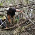 Two scientists among mangrove roots assess soil