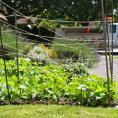 Garden in city yard