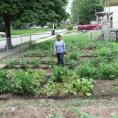 Grad assistant in an urban garden