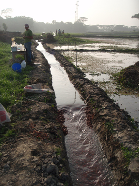 Irrigation channel in Bangladesh