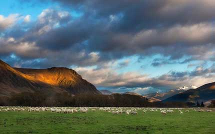 Pasture with sheep and mountains in background