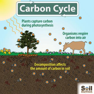 What Do Soils Do? | Soil Science Society of America