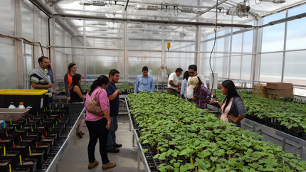 NDSU Greenhouse visitors and new varieties of kidney beans