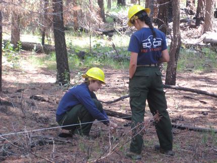 Dos investigadores con cascos amarillos y ropa de trabajo en un bosque con agujas de pino debajo de sus pies y maleza verde.  Uno de los investigadores está agachado mientras el segundo mira.