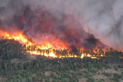 En primer plano, cepillo de desierto.  En el fondo, los árboles se consumen en llamas, con nubes de humo púrpura que cubren el cielo.
