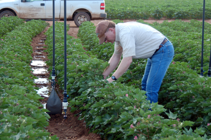 Researcher in cotton field adjusting center pivot irrigation system