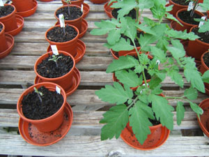 "When ""soil"" isn't soil: Potting soil options evolve to use"