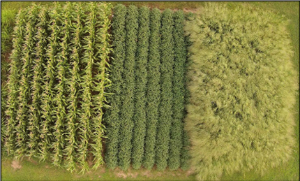 Aerial view of corn, soybeans, and switchgrass