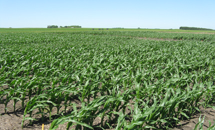 Minnesota test field for corn and in-furrow fertilizer