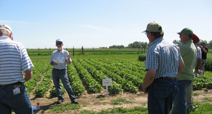 Field day with pulse (bean) crops in Alberta, Canada