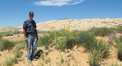 Sand sunflower is only found on Arizona and Utah sand dunes