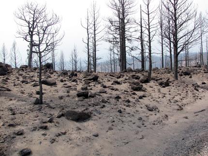 Ladera árida con suelo arenoso y troncos de árboles quemados