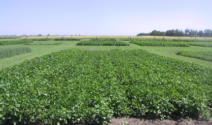 Bean test plot with narrow rows