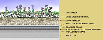 Schematic diagram of a monolithic green roof