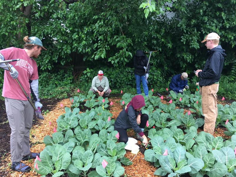 Community Gardens Soil Science Society Of America