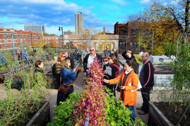 People standing around a rooftop vegetable garden