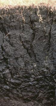 What makes soil soil soil science society of america for Soil society of america