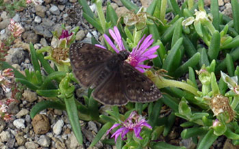Butterfly visiting a flower on a green roof