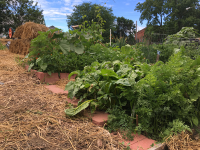 This Community Garden Plot, On A Hillside, Needed Terracing And Mulch To  Protect The Soil. Photo Credit M. Pings.