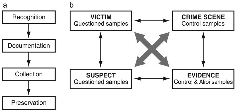 forensic science essay questions Forensic science uses the scientific method to investigate crime scenes and determine perpetrators a college student who is majoring in forensic science is required to do many papers and research.