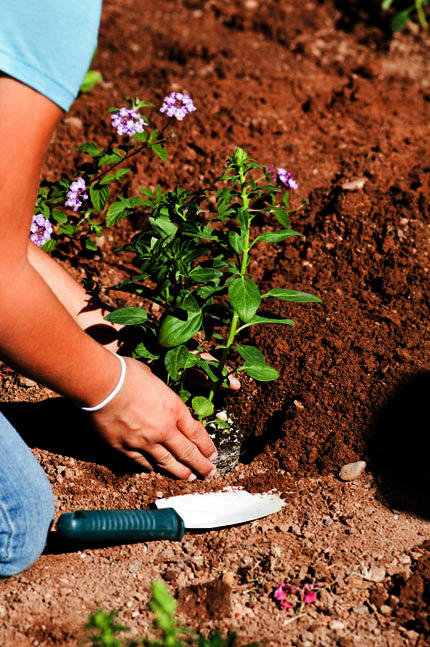 Soil horizons features is the soil in my backyard safe looking at the problem of lead - Urban gardening in contaminated areas ...