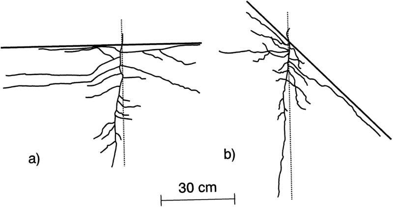 hydrotropism examples